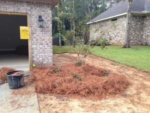Right shrub planting